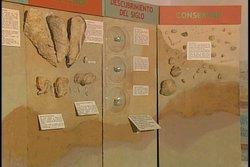 Domo de Zaza: sitio paleontológico único en Las Antillas