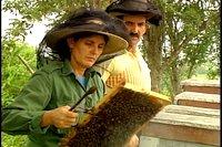 Buena cosecha de miel en apiarios espirituanos