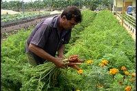 La Quinta: Portento de la Agricultura Urbana