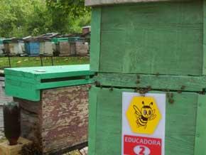 Incrementan apicultores producción de abejas reinas