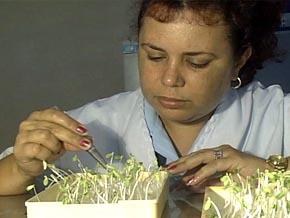 Buenas semillas para una agricultura sostenible
