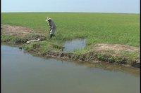 Duplicará Sancti Spíritus área dedicada al cultivo del arroz con respecto al 2010.