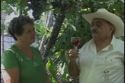 El señor de los Vinos