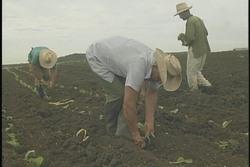 Indemniza Empresa de Seguros a agricultores afectados por fenómenos meteorológicos